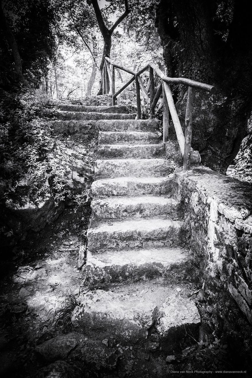 steps, steps and staircases, staircase, stairs, railing, tree, forest, no people, hand rail, nature, day, outdoors