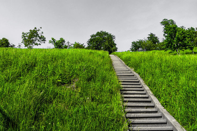 ☀️ Naturelovers Black And White With A Splash Of Colour Stairs Pattern Pattern, Texture, Shape And Form EyeEm Best Shots EyeEm Selects EyeEm Masterclass Outdoor Photography EyeEm Taking Photos Nature Landscape EyeEm Nature Lover Background No People Green Color Grass Growth Master_shots Trees Up Low Angle View Tree Rural Scene Agriculture Crop  Sky Parallel Railroad Tie