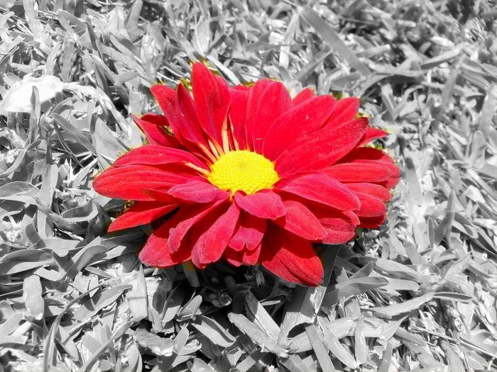 Red Flower Flower Head Petal Close-up Fragility Beauty In Nature Nature Freshness No People Pollen Outdoors