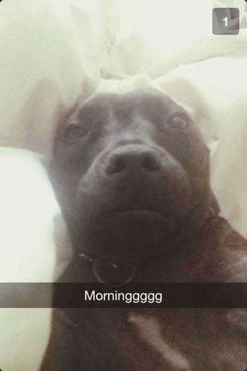 Good morning Doggy Bailey
