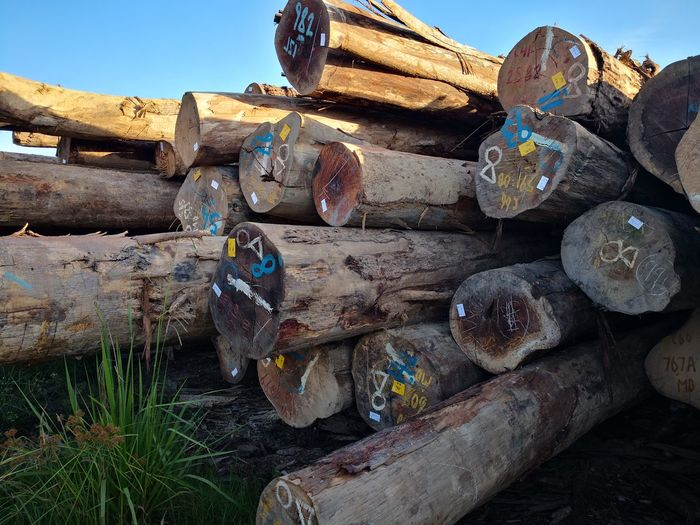 Stack Heap Sky Deforestation Tree Stump Axe Fossil Fuel Fuel Pump Tree Ring Environmental Damage Forestry Industry Log Lumber Industry Woodpile Pile Timber Firewood Recycling Center Aluminum