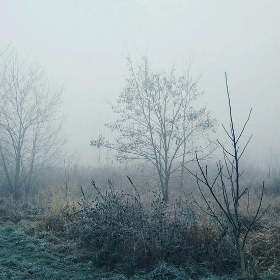 Chasing Fog EyeEm Nature Lover VSCO Deepfreeze