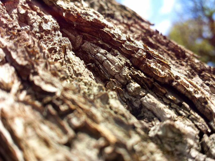 Little Big Macro 1. Taking Photos Nature_collection Macro Littlebigmacro