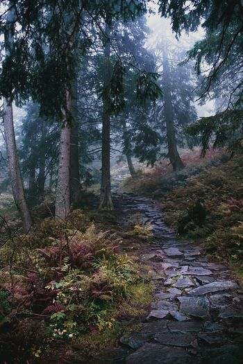 Day No People Leaves Green Fantasy Colors Nature Road Forward Movement Path Path In Nature Tree Forest Water Sky Landscape Grass Moss Pine Woodland Evergreen Tree WoodLand Eastern Europe Foggy