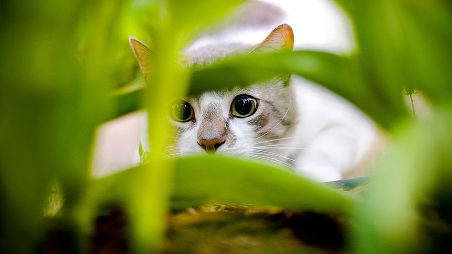 holy cat EyeEm
