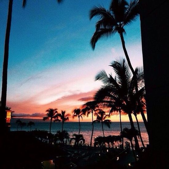 Check This Out Hello World Taking Photos EyeEm Best Shots Summer Sunset Landscape Palm Trees Photography Beautiful