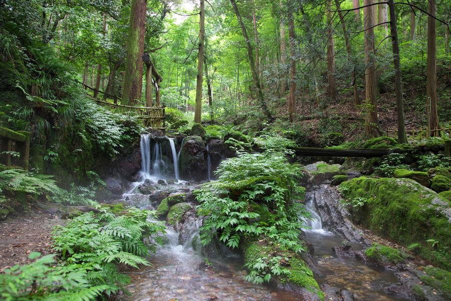 瓜割の滝 Japan Photography Forest Small Falls Fall Beauty From My Point Of View Capture The Moment Fukui Prefecture Green Color