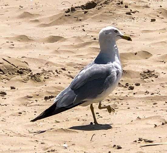 High angle view of seagull perching on sand