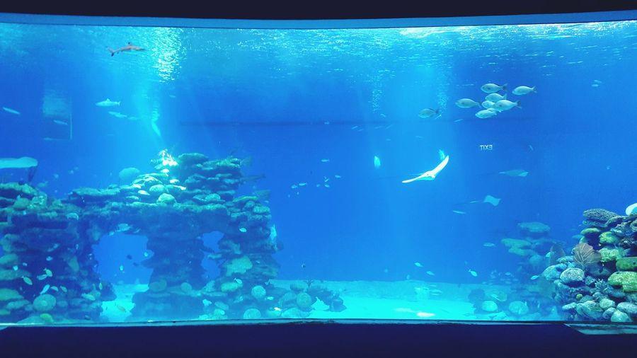 Aquarium Place Blue EyeEm Nice Enjoying Life Water Wildlife Fish Israel