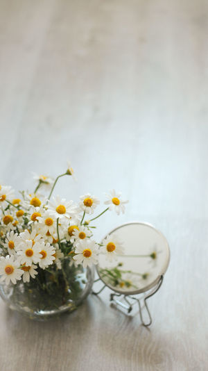 Close-up of white flowers in glass vase on table