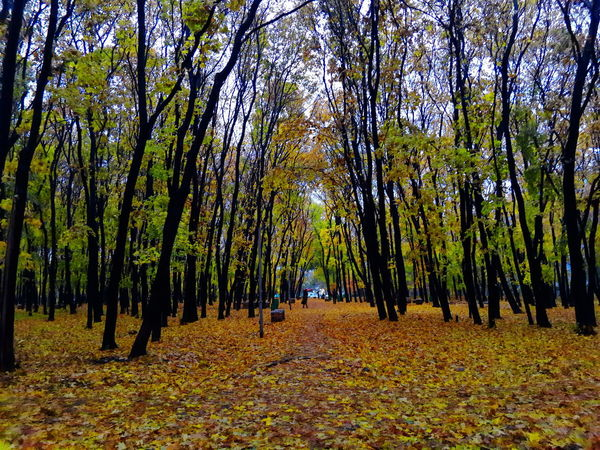 Autumn 2017 Nature Beauty In Nature Autumn EyeEm Best Edits Hello World EyeEm Best Shots Samara EyeEm Gallery Russia Helloworld Eye4photography  EyeEmBestPics Nature EyeEm Best Shots - Nature Nature Photography EyeEm Nature Lover Nature_collection красота Природа Eyemphotography Naturelovers Yellow