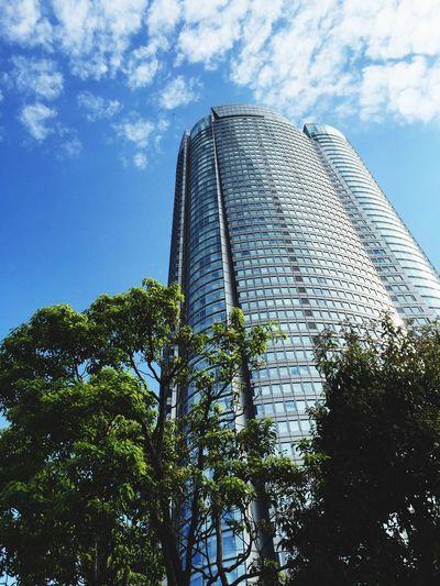 Blue Sky Building Tree