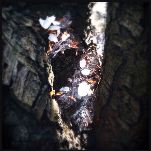 Petal Hammock Fallen Petals Hipstamatic Pear Tree