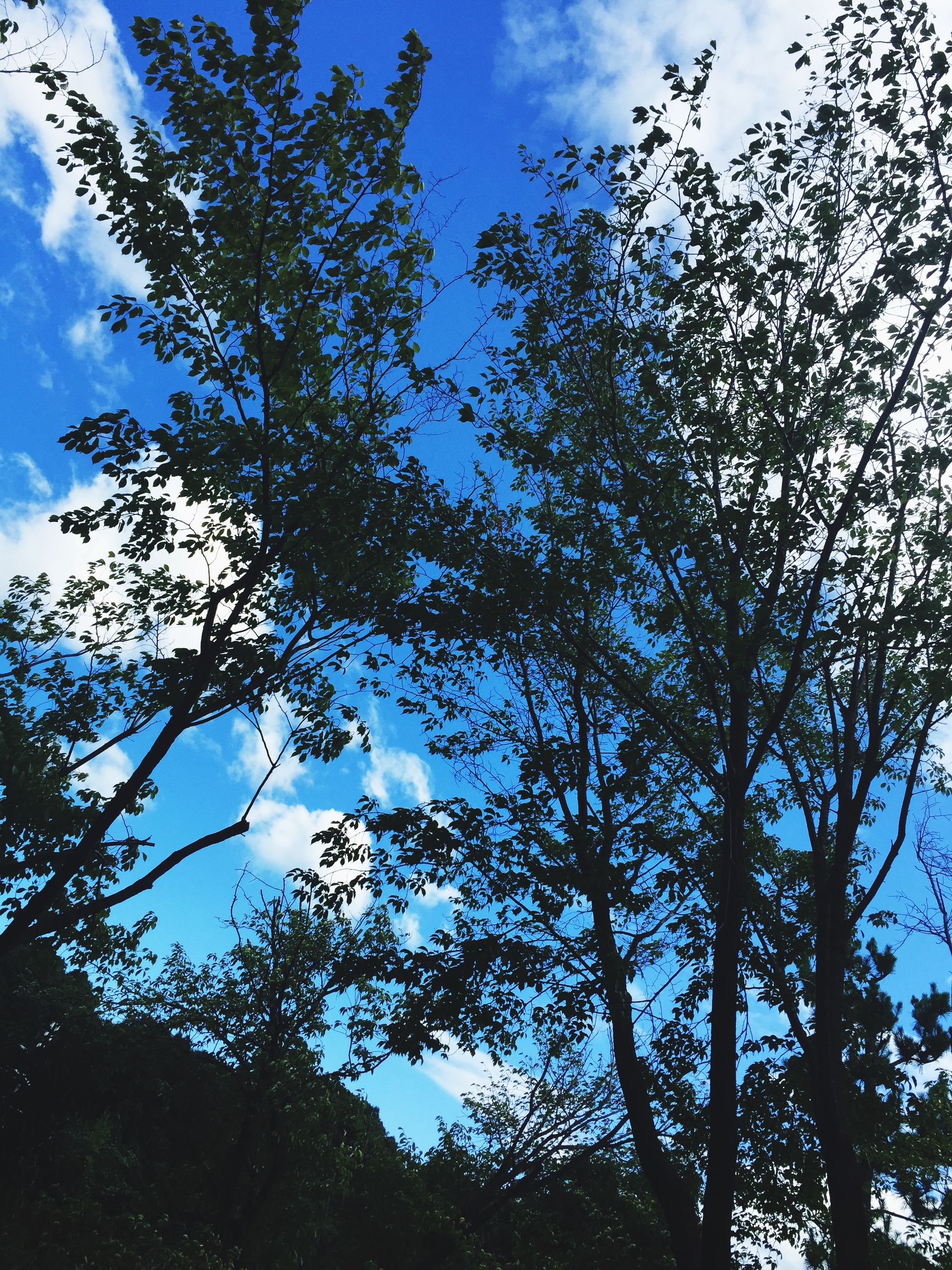 tree, low angle view, sky, branch, growth, nature, tranquility, beauty in nature, cloud - sky, cloud, scenics, day, bare tree, outdoors, no people, silhouette, blue, tranquil scene, high section, cloudy