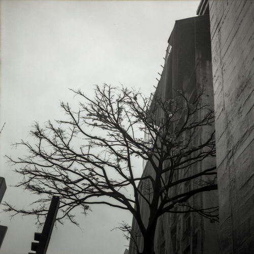Medium Format Film Photography Filmisnotdead Analogue Photography Urban Geometry Urban Monochrome Tree Growth Architecture No People Low Angle View Bare Tree Branch Outdoors Built Structure Day Building Exterior