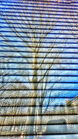 Reflections of Winter. Window Windows Window Reflections Window Reflection Tree Treescollection Reflection Reflection_collection Nature_collection Eyem Best Shots Nature_collection Reflections And Shadows Winter Winter Trees Winter_collection Blue Wave