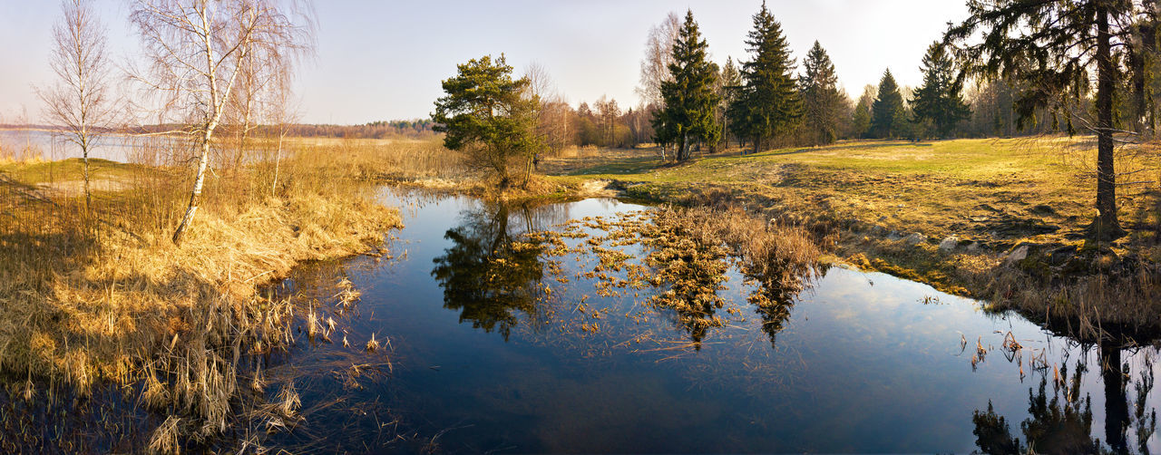 Water Reflection Plant Tranquility Tree Tranquil Scene Lake Beauty In Nature Scenics - Nature Nature Sky No People Grass Non-urban Scene Day Wetland Panoramic Landscape Environment Outdoors Swamp Pollution Belarus Spring Reflection Tree Birch Tree