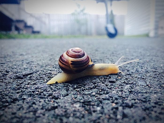 Nature On Your Doorstep Snail Summer Nature Nature_collection EyeEm Best Shots EyeEm Nature Lover IPhoneography Iphoneonly AMPt_community