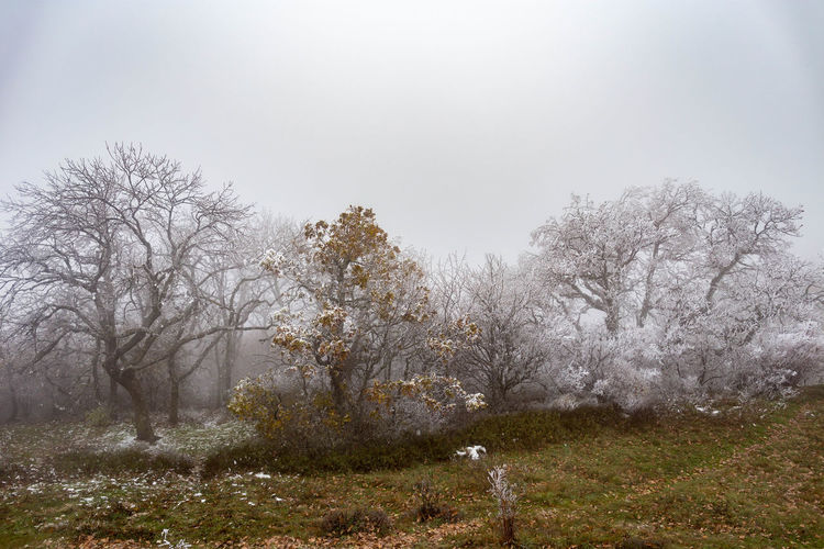 Tree Plant Land Beauty In Nature Tranquility Sky Nature No People Tranquil Scene Day Fog Environment Field Landscape Cold Temperature Winter Non-urban Scene Scenics - Nature Growth Outdoors WoodLand Snowing