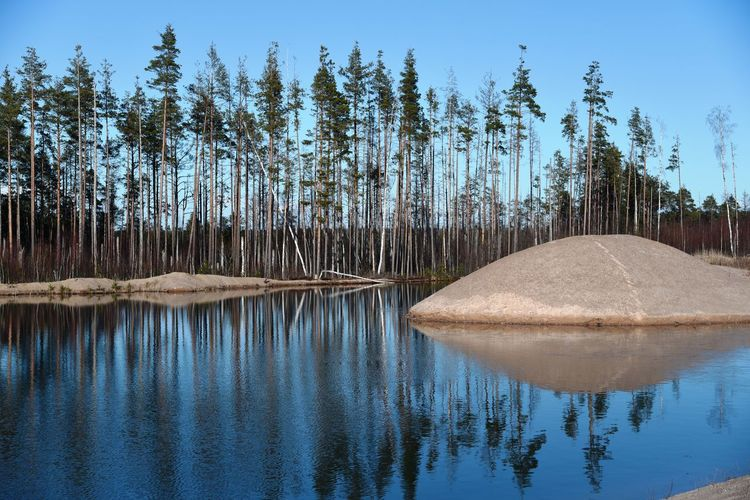 Panoramic view of lake against trees in forest
