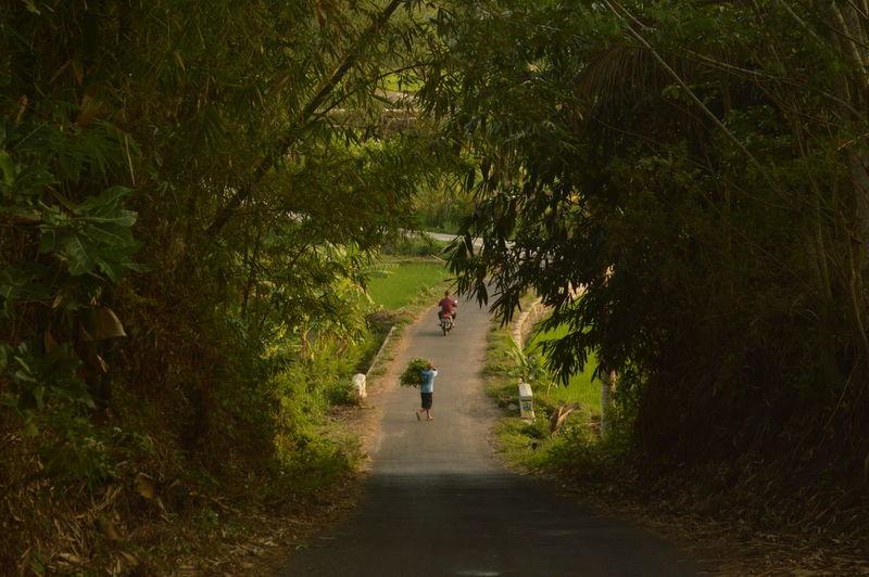 Walking Nature