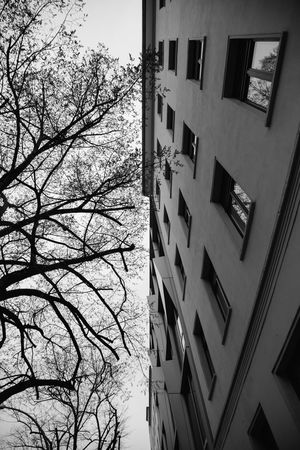 Tree Branches Silhouette Blackandwhite Black And White Architecture Architecture And Nature Half Water Sky Architecture Building Exterior Built Structure Residential Structure Human Settlement Exterior Directly Below Autumn Mood