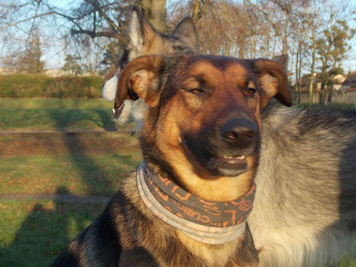 Dog Dogs Pets Pet Aniamls Chien Animal First Eyeem Photo Hello World