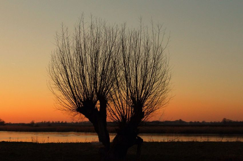Sunset Nature Beauty In Nature Tranquility Tranquil Scene Tree Bare Tree No People Idyllic Outdoors Scenics Sky Willow Tree Silhouette d willow] Zeeuws Vlaanderen Zeeland  Polder silSun eLone sIsolated iSingle Tree gDay tree day EyeEmNewHere