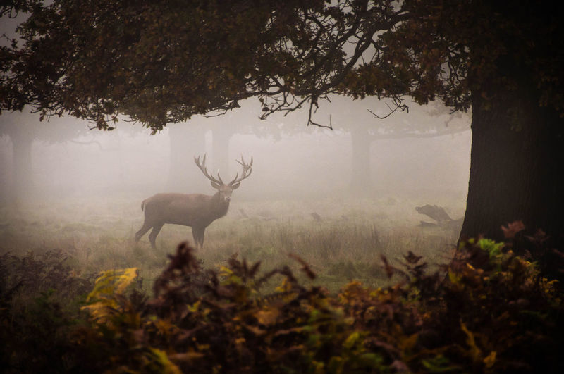 Deer standing on field in forest