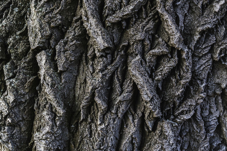 Full Frame Close-Up of Tree Bark Berlin Color Image Germany 🇩🇪 Deutschland Horizontal Outdoors No People Backgrounds Full Frame Textured  Tree Trunk Trunk Close-up Day Pattern Tree Rough Plant Nature Textured Effect Natural Condition Focus On Foreground Natural Pattern Detail Bark