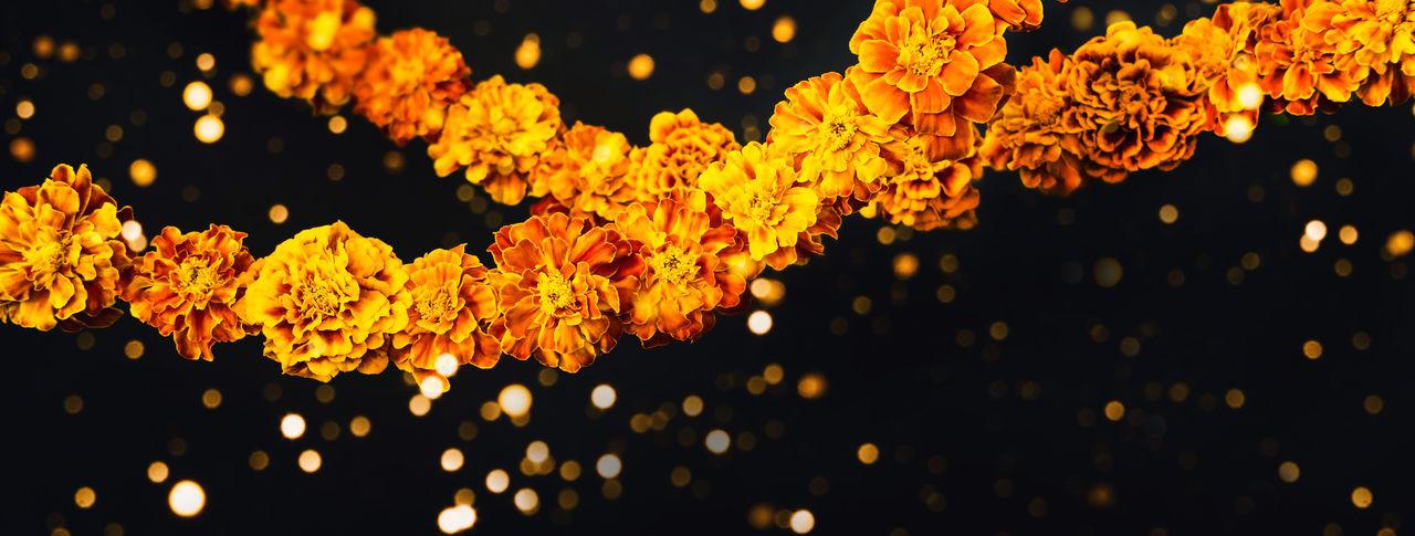 Close-up of yellow illuminated plants at night