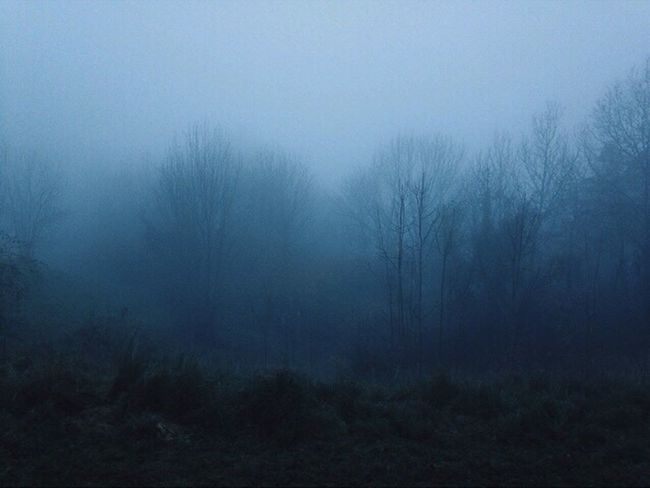 Fog Foggy Foggy Day Foggy Morning Fog_collection Foggy Weather Fog In The Trees Lowlight Night Tree Nature Sky Bare Tree No People Outdoors Silhouette Hazy