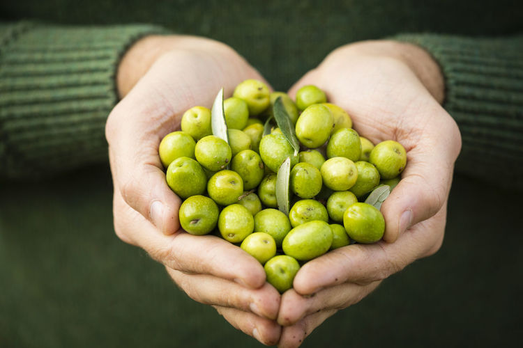 Close-up of hand holding olives
