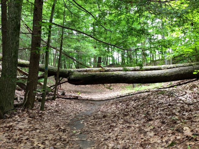Sometimes the trail of life has obstacles to overcome... don't be denied your true path.
