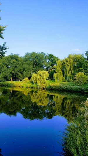 Nature Reflection Blue Water Tree Outdoors No People Day Sky Beauty In Nature Beauty In Nature Amsterdam Nature Backgrounds Landscape Tranquility Travel Destinations Clear Sky