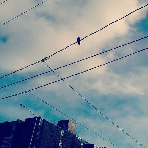 With the birds i share such a lonely view Birds Quebeccity Rhcp