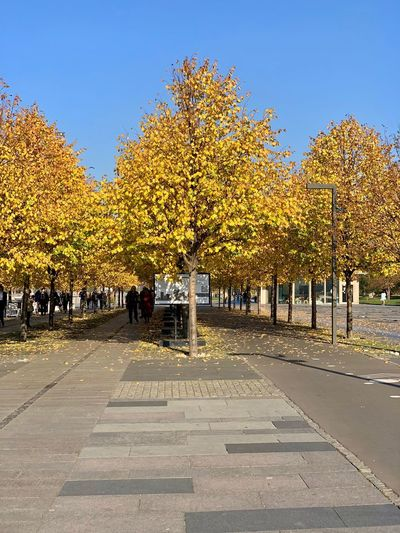 Autumn Change Nature Outdoors Yellow Plant Tree Autumn colors autumn mood Fall Fall Beauty Fall Leaves Fall Colors Muzeon Muzeonpark Park Moscow Direction Footpath The Way Forward Beauty In Nature Park - Man Made Space Treelined Autumn Collection Growth My Best Photo
