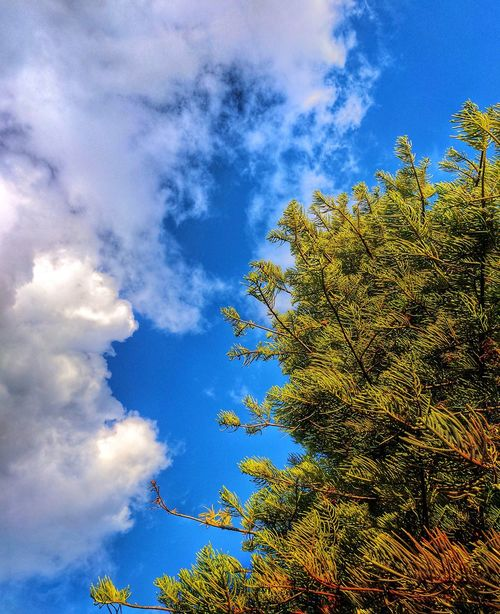 Connection 1- Sky Cloud - Sky Tree Low Angle View Growth Beauty In Nature Nature Day Blue No People Outdoors Tranquility Scenics Branch Freshness Park Life Tree Weather Pine Tree Clouds And Sky Nature Photography
