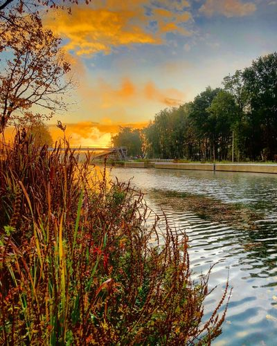 Colorful and dramatic sunrise over the river between the woods as seen from behind a bunch of wild flowers Tree Sky Plant Water Sunset Cloud - Sky Beauty In Nature Scenics - Nature Tranquility Nature Tranquil Scene Lake No People Growth Orange Color Reflection Outdoors Non-urban Scene Idyllic