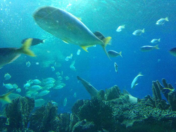 Aquaria Klcc Aquarium Fish Malaysia Sea Life Underwater