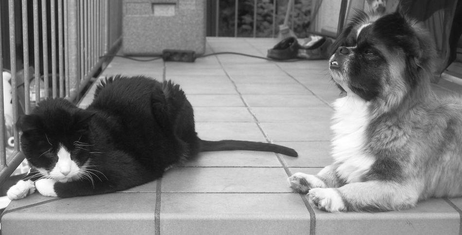 Catanddog Closetoyou Friends Friendship Hello Letshavefun Likeyou Love Together