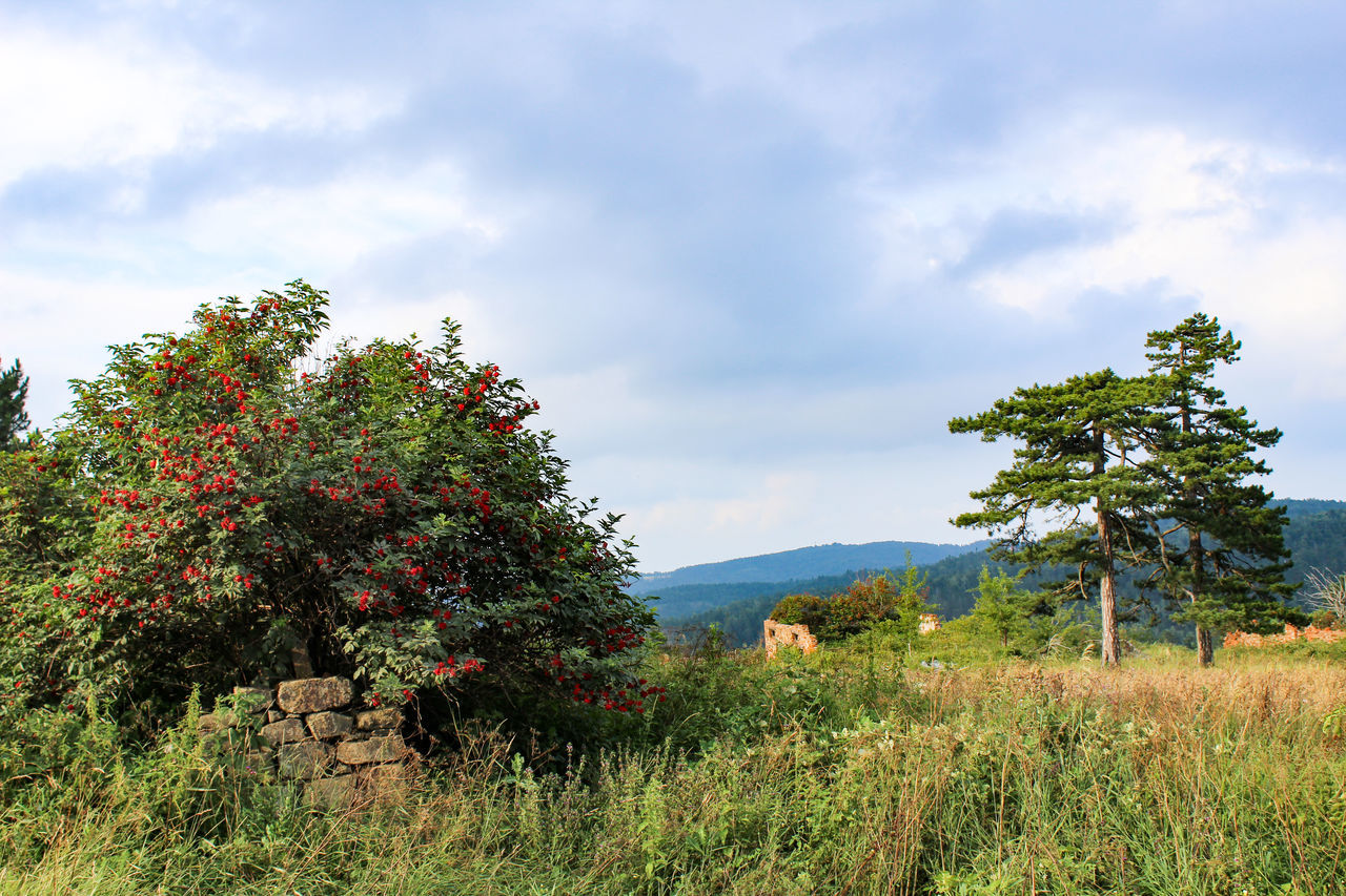 TREES AND PLANTS GROWING ON FIELD AGAINST SKY