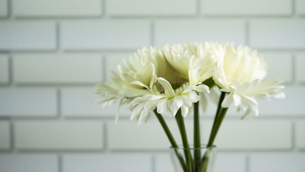 White flowers are blooming in glass jar in front of white bricks wall. Beauty In Nature Blooming Close-up Day Flower Flower Head Focus On Foreground Fragility Freshness Glass Growth Indoors  Jar Nature No People Petal Plant Vase White Brick Wall White Color White Flower White Flowers