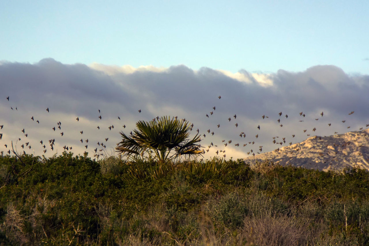 Flock of birds flying over landscape against sky
