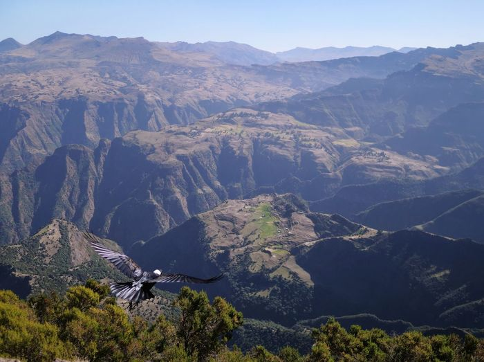 Simien Mountains Ethiopia Africa Simien Mountains National Park Raven Bird Wings Nature Animal Animal Themes Wildlife Tree Mountain Blue Sky Mountain Range Landscape Mountain Peak Valley Mountain Ridge Spread Wings The Great Outdoors - 2019 EyeEm Awards