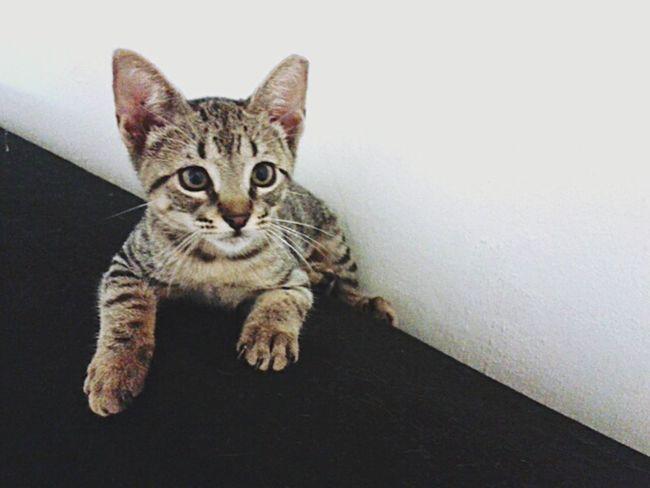 Cat Miau *-*  Cutie