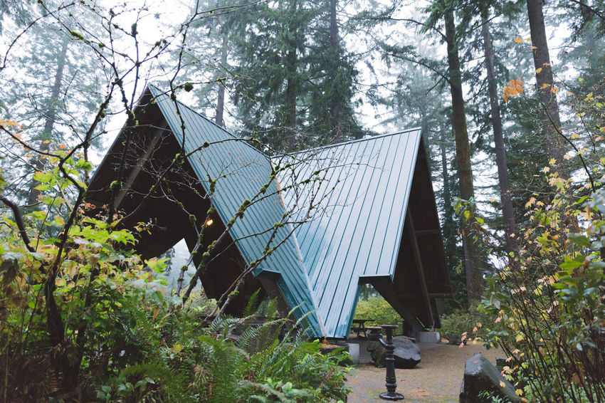Hoyt Arboretum / Forest Park in Portland, Oregon, USA. Fall time foggy and rainy day. Alternative Energy Architecture Built Structure Day Forest Growth Nature No People Outdoors Plant Tree