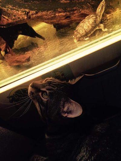 Cat Tortoise Enjoying Life Taking Photos