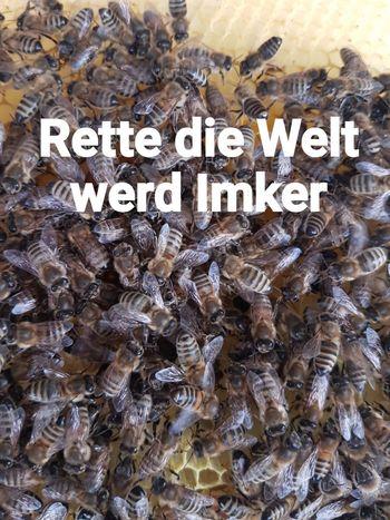 Rette die Welt werd Imker Imker Fotografie Bienen  Bienen  Biene 🐝 Bienenwabe Bienenzucht Bienen🐝 Bienenhaus Sprüche Text Soziales Bee Bee 🐝