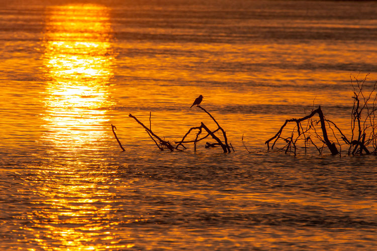 Silhouette birds on sea against sky during sunset